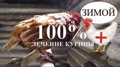КАК Я ВЫЛЕЧИЛ КУРИЦУ - 100% выживаемость/ Куры / Куры несушки заболел...