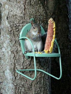 A squirrel and his corn