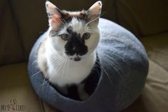 If your cat loves to hide out and keep an eye on things you need to check out our TwinCritters' cat cave review! Colorful, felt cat beds made from NZ wool!