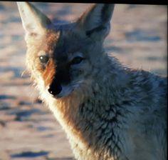 tiere in film und bild sowie eigene erlebnisse: ich war heute in der serengeti :-)
