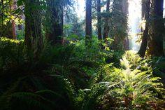 Hoh Rain Forest, Olympic National Park, Washington...Awesome Hike!!!