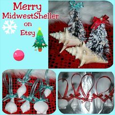 Visit MidwestSheller on Etsy for coastal items/plants, mermaidtails& Christmas decor too! Save 15% w/ couponcode thank2