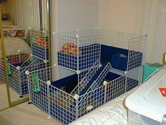 15 Top C&C Cage Designs for your Guinea Pigs - Guinea Pigs Australia