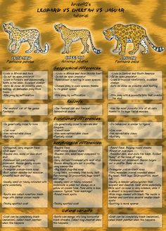 Leopard VS Cheetah Vs Jaguar by on DeviantArt Black Panther Animal Facts, Jaguar Animal Facts, Cheetah Animal, Cheetah Facts For Kids, Animal Facts For Kids, Jaguar Habitat, Jaguar Tier, Tiger Species, Panthera Pardus