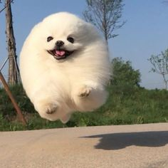 i literally post dogs and puppies thats it Fluffy Animals, Animals And Pets, Baby Animals, Cute Animals, Cute Puppies, Cute Dogs, Dogs And Puppies, Doggies, Cute Creatures
