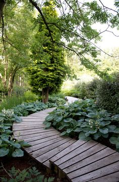 This winding sinuous boardwalk bordered with trees and hostas is part of a 6-acre garden in Goring, a village west of London.