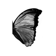 Michael Thompson: Butterfly Wing, New York City, Michael Thompson Art Gallery, Michael Thompson Pictures, Michael Thompson Photos - New York City Black And White Aesthetic, Black N White, All Black, Color Black, Butterfly Kisses, Butterfly Wings, Butterflies, Cadre Design, The Magic Faraway Tree