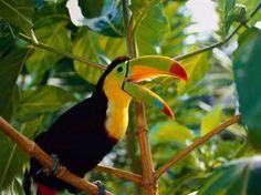 Resultado de imagen para aves exoticas