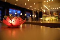 Beautiful picture taken from Cafe Brasco in Stockholm! Their site: http://cafebrasco.se #flower #brasco #cafe #food #sweden