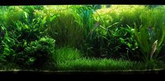 My 124g planted tank - Aquascaping - Aquatic Plant Central