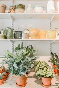 De nieuwe winkel Wildernis in Amsterdam maakt de stad groener | Binti Home blog : Interieurinspiratie, woonideeën en stylingtips