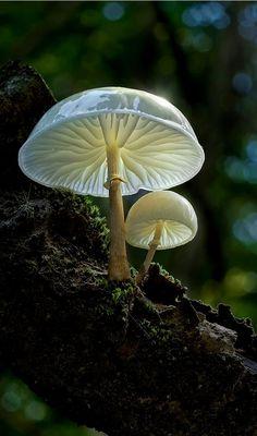 Fairy Tale.. (Von Moonshroom )