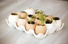 joy ever after :: details that make life loveable :: - Journal - how does your {herb} garden grow? Egg pots for growing seeds.