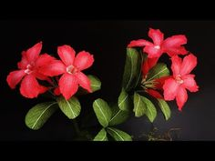 ABC TV | How To Make Adenium Obesum Paper Flower From Crepe Paper - Craft Tutorial - YouTube