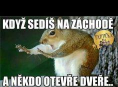 Funny Memes, Jokes, Awkward, Funny Pictures, Humor, Animals, Fanny Pics, Animales, Husky Jokes