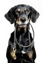 forskning.no > Hvor lenge kan hunden være alene?