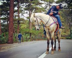 Another classic Baguio experience, horses can be rented and taken around the vicinity of Wright Park. Photo by Nikka Corsino Baguio City, Philippines, Horses, Memories, Park, Classic, Life, Memoirs, Derby