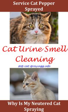 How To Get Cat Pee Smell Out