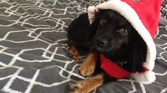 Help this entry win a WIN a $600 Ivory Coat Ultra-Premium Food, Treats