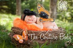 Inspiration For New Born Baby Photography : Monarch Butterfly Wings