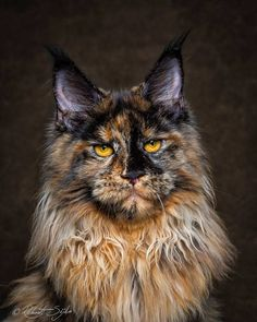 12 Cats Who Are Basically Too Majestic For This Earth. - http://www.lifebuzz.com/majestic-cats/