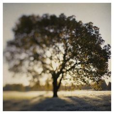The Joy Tree - Fine Art Photograph