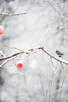 Bird on a Christmas holiday decorated branch...