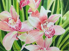 pink Cymbidiums | by nirsha