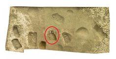 Figura 1. La necropoli neolitica della Signora di Vicofertile (1), la cui tomba (cerchiata in rosso) ha intorno  sepolture di giovani adulti e di un bambino . Nella tomba della Signora è stata rinvenuta la statuina di dea Madre (fig. 2) (1) http://www.archeologia.parma.it/storia-di-parma/neolitico/neolitico-evoluto/