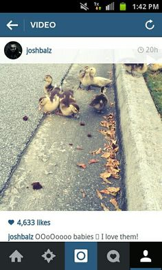 Yep, Josh Balz of Motionless in White posted a video of baby ducks. I don't think any of us saw this coming lol  :)