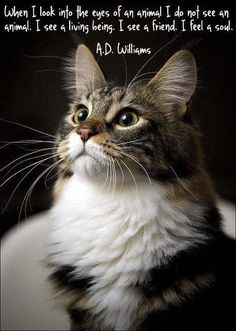 """CATS / PETS """"When I look into the eyes of an animal"""". For the love of pets / a few of my favorite things I Love Cats, Cute Cats, Funny Cats, Cat Quotes, Animal Quotes, Quotes About Cats, Life Quotes, Crazy Cat Lady, Crazy Cats"""