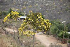 En el resplandor del verano, coloridos árboles adornan el valle de Cantarranas. (Foto: Efraín Salgado)