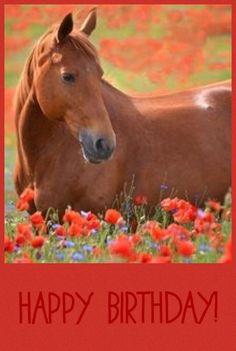 Happy Birthday horse … | happy birthday/bonne fête ...