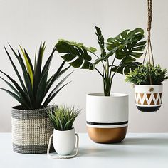 Beautiful plant pots   via Adairs on Instagram