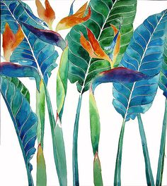 Gabby Malpas a.k.a. Mango Frooty | Strelizia | Watercolor