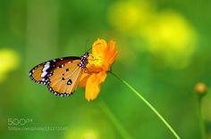 Orange Love !! by trivedidarshan. @go4fotos