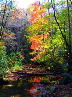 Here's the sun illuminating the Fall colors on the Dugger Trail at Blue Ridge Mountain Club