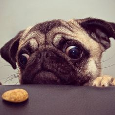 """Must reach.. the cookie!"""