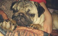 <3 #PugLove