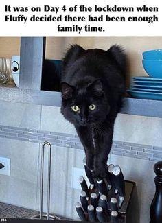 Funny Animal Jokes, Really Funny Memes, Funny Animal Pictures, Cute Funny Animals, Stupid Funny Memes, Funny Laugh, Funny Relatable Memes, Funny Photos, Funny Cats