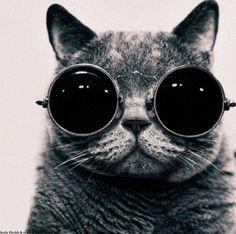 Los #gatos también tienen derecho a cuidar su vista con unas bonitas #gafas al estilo Lennon, ¿verdad?