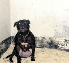 On death row: Lennox  Prime Minister making last minute plea!  Read, PRAY & share!    PLEASE email & voice your sentiments:  complaints@belfastcity.gov.uk & dogwardens@belfastcity.gov.uk