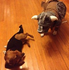 Dawgs dressed up as a dragonborn and dragon from Skyrim in outfits that she hand-crocheted.
