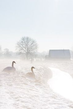 Winters landschap - Echt Holland