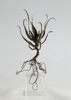 Bronze botanical specimen from Cape Town's Table Mountain by artist, surfer dude and botanist Nic Bladen.  From HAND/EYE's 09/South Africa issue, available at www.handeyemagazine.com/buy