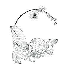 Resultat d'imatges de orchid line drawing