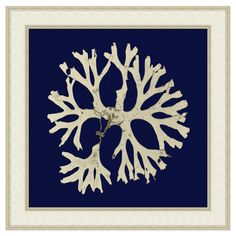 Depicting a seaweed silhouette against a navy background, this American-made art print offers marine appeal for your walls.  Product...