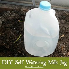 Making a homemade self watering milk jug is an easy DIY project that can be completed in just a few minutes. It works great for deep watering garden plants | Montana Homesteader