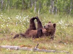 Stretching - Lazy life in Eastern Finland