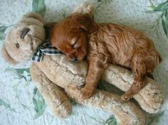 Being this cute can be exhausting: | 20 Puppies Cuddling With Their Stuffed Animals During Nap Time